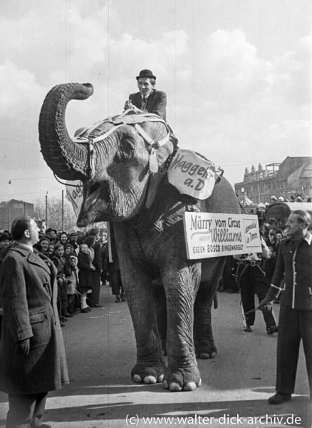 Ein Elefant im Rosenmontagszug