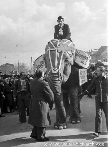 Elefant Märry im Rosenmontagszug