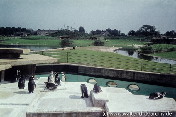 Pinguingehege im Kölner Zoo