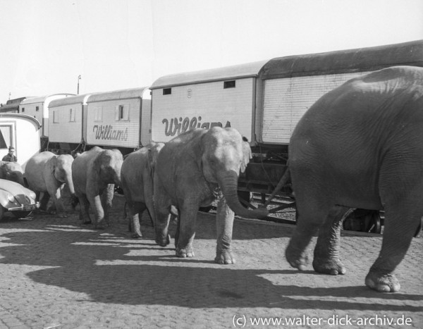Circus Wiiliams -Elefantenverladung