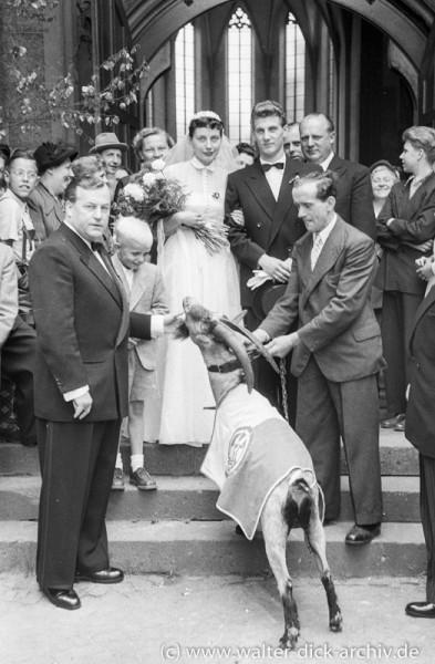 Der Geißbock gratuliert zur Hochzeit 1953