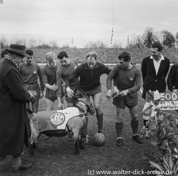 """Der Geißbock attackiert die """"Geißböcke"""". 1963"""